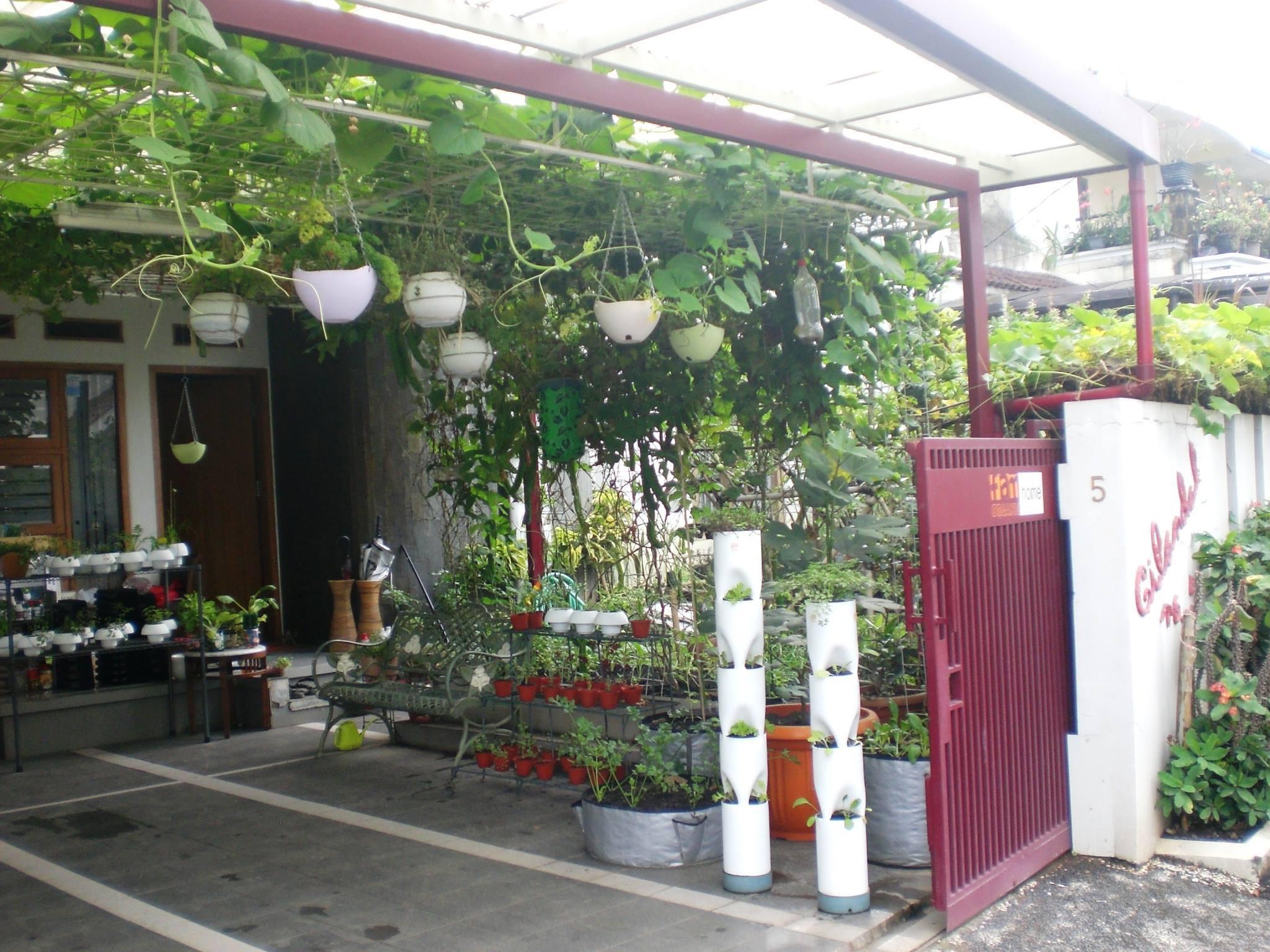 Hasil gambar untuk 5 Obat Herbal Yang Bisa Tumbuh di Balkon Anda