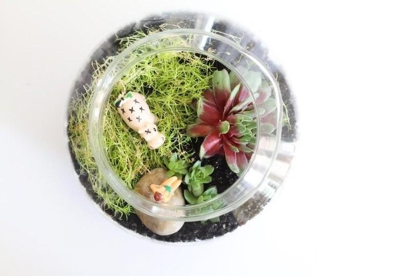 ... Tangki 16 Cm X 10 Cm. Jual Vas Bejana Pot Kaca Terbaik Lazada co id Source · Yuk Buat Terrarium Sendiri RumahCom Menghias ruangan dengan tanaman