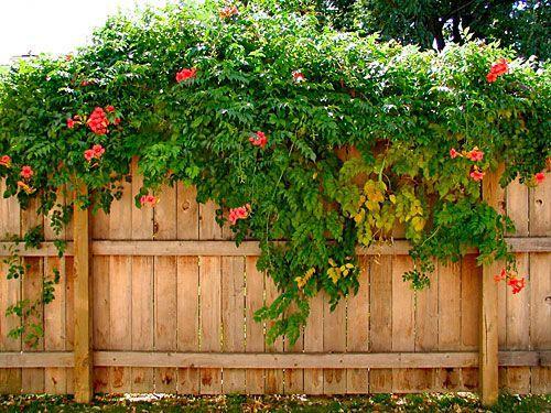 tanaman untuk rumah minimalis
