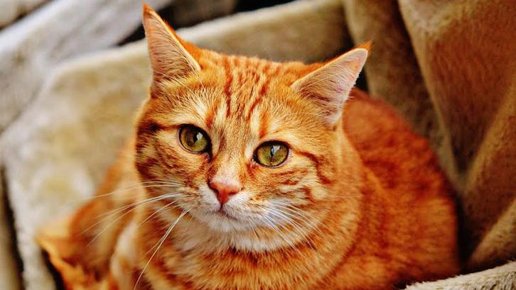 87 Gambar Binatang Peliharaan Rumah Gratis