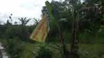 Tanah 1556 M2 Yogyakarta Desa Pendowoharjo Sleman