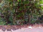 Tanah Murah Super Prospektif di Petang, Badung, Bali