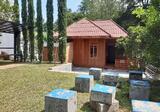 Rumah Villa, ada kolam ikan, mata air dan Kolam Renang