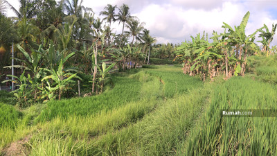 Disewa - Tanah kontrakan