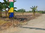 Tanah luas dan murah cocok untuk perumahan atau kavling di Mojokerto