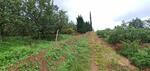Kebun Apel Terbai Kota Batu Langsung Cek Lokasi
