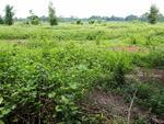 tanah industri citeurep bogor