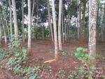 Jual Tanah Datar Lokasi Pemalang Jawa Tengah