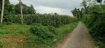 Tanah Murah dan Luas Kondisi Subur di Wajak Malang