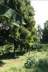Dijual Tanah Komersial area Mandalawangi Banten