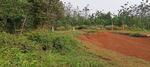 Tanah kebun Pohon Sengon Luas Tanah 153ha dijual murah Rp 25. 000/meter Lokasi pinggir jalan propinsi