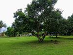 Dijual Tanah di Jl Raya Anyer, Serang, Banten plus ada bangunan rumah, resto yg msh berjalan