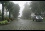 Jual Kavling Siap Bangun Nuansa Villa View Kebun Teh Gedeh Puncak Cipanas