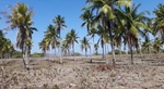Tanah Lahan, Sumba