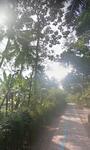 Dijual Tanah 700m2 Magelang dekat borobudur untuk homestay/hotel