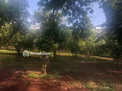 Dijual - Tanah kebun mangga gincu desa Durajaya Beber Cirebon