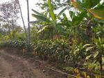 Murah Kebun Cengkeh 1090 m2 Akses Mobil di Pedesaan Bojong Purwakarta Jawa Barat