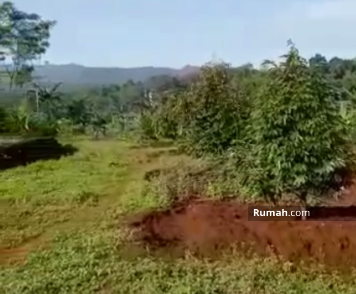 Lahan Investasi Tanah Kavling Murah Kebun Durian di Pekalongan Jawa Tengah #104194183