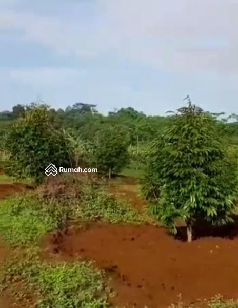 Lahan Investasi Tanah Kavling Murah Kebun Durian di Pekalongan Jawa Tengah #104194185