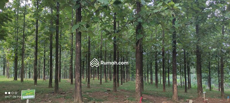 Tanah Murah SHM Pinggir Jalan Provinsi Bonus Kebun Jati #104629155
