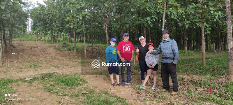 Tanah Murah SHM Pinggir Jalan Provinsi Bonus Kebun Jati #104629161