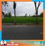 Tanah Murah strategis pinggir jalan cocok untuk tempat usaha dekat Bandara Blimbingsari