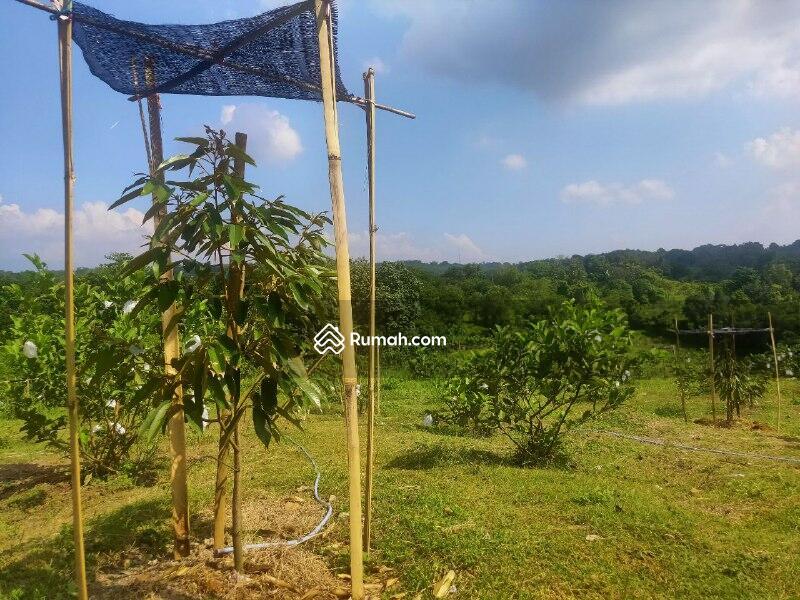 Yuk Berkebun Di Kavling Kebun Termurah dan Pengelolaan Oleh  Ahli #108165913