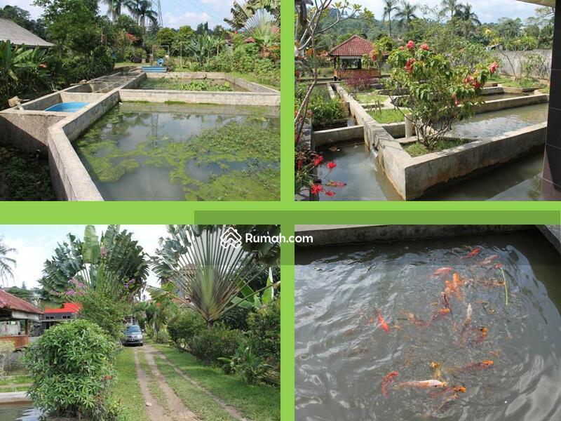 rumah kebun kolam ikan kampung gadog ds pandan sari